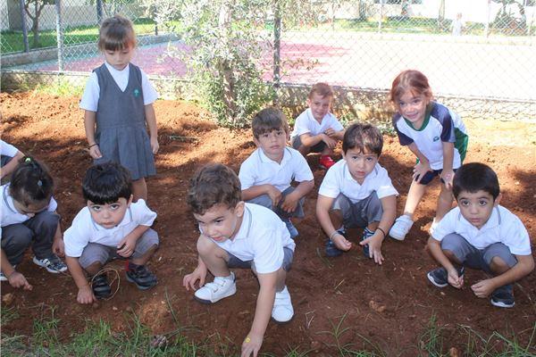 KG planting